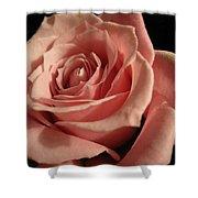 Beautiful Peach Rose Shower Curtain