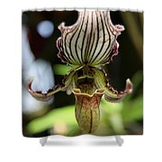 Beautiful Striped Lady Slipper Shower Curtain