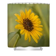 Beautiful Sunflower Shower Curtain