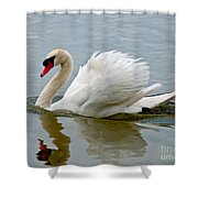Beautiful Swan Shower Curtain