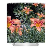 Beautiful Tiger Lilies Shower Curtain