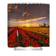 Beautiful Tulip Field Sunset Shower Curtain