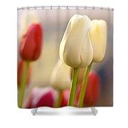 Beautiful Tulips Shower Curtain