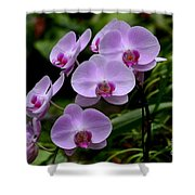 Beautiful Violet Purple Orchid Flowers Shower Curtain