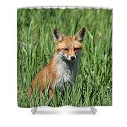 Beautiful Vixen Shower Curtain