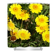 Beautiful Weeds 32655 Shower Curtain