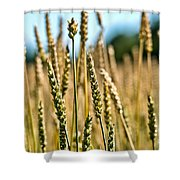 Beautiful Wheat Shower Curtain
