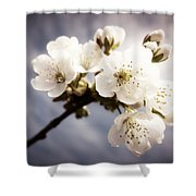 Beautiful White Blossoms Shower Curtain