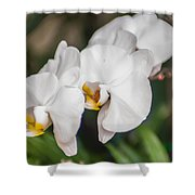 Beautiful White Orchids Flower Bloom Shower Curtain