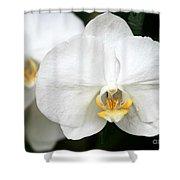 Beautiful White Phanaenopsis Orchids Shower Curtain