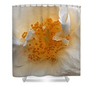 Beautiful White Rose Shower Curtain