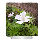 Beautiful Wild Geranium Shower Curtain