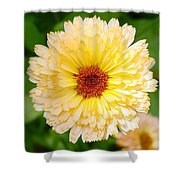 Beautiful Yellow Marigold Goldbloom Close Up  Shower Curtain