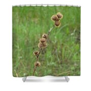 Prickly Histle Beauty Among The Grasses Shower Curtain