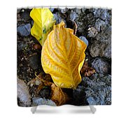 Beauty Among The Rocks Shower Curtain