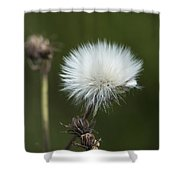 Beauty Among The Thistles Shower Curtain