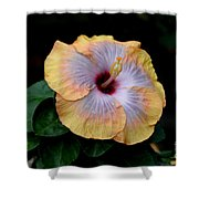 Beauty Before Age Shower Curtain