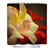 Beauty Beheld Shower Curtain