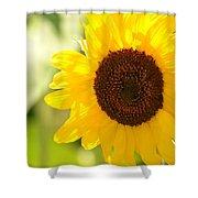 Beauty Beheld - Sunflower Shower Curtain