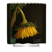Beauty Bows Shower Curtain