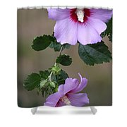 Beauty Doubles Shower Curtain