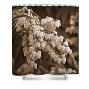 Beauty In Abundance Shower Curtain