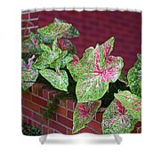 Beauty In Decorative Foliage Shower Curtain