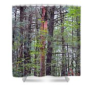 Beauty In Nature 2 Shower Curtain