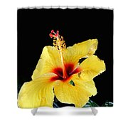 Beauty In The Natural Shower Curtain