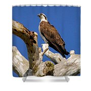 Beauty In The Tree Shower Curtain