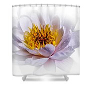 Beauty Lies Within Shower Curtain
