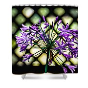 Beauty Lines Shower Curtain