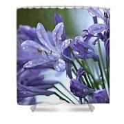 Beauty Lilies Shower Curtain