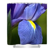 Beauty Of Iris Shower Curtain