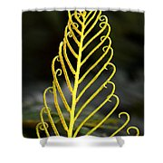 Beauty Of Nature Fern 3 Shower Curtain
