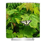 Beauty Of Summer Shower Curtain