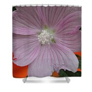 Beauty Of The Hollyhock  Shower Curtain