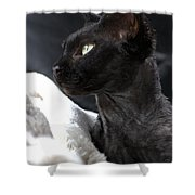 Beauty Of The Rex Cat Shower Curtain