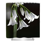 Beauty Of The Snowdrops Shower Curtain