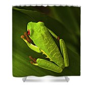 Beauty Of Tree Frogs Costa Rica 6 Shower Curtain