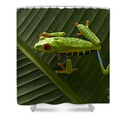 Beauty Of Tree Frogs Costa Rica 8 Shower Curtain