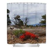 Beauty On 25 Mesa Panoramic Shower Curtain