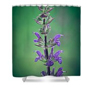 Beauty Shower Curtain