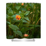 Beauty Under Our Feet Shower Curtain