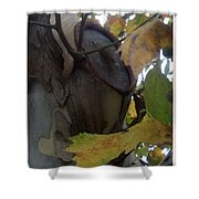 Beauty With Age Shower Curtain