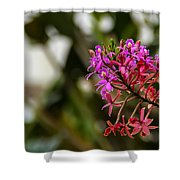 Beauty1 Shower Curtain by Fabio Giannini