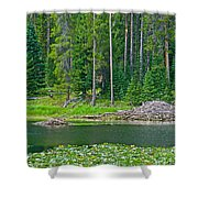 Beaver Dam In Heron Pond In Grand Teton National Park-wyoming Shower Curtain