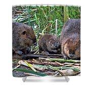 Beaver Family Shower Curtain