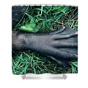 Beaver Foot Shower Curtain