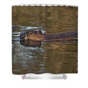 Beaver Swimming Shower Curtain